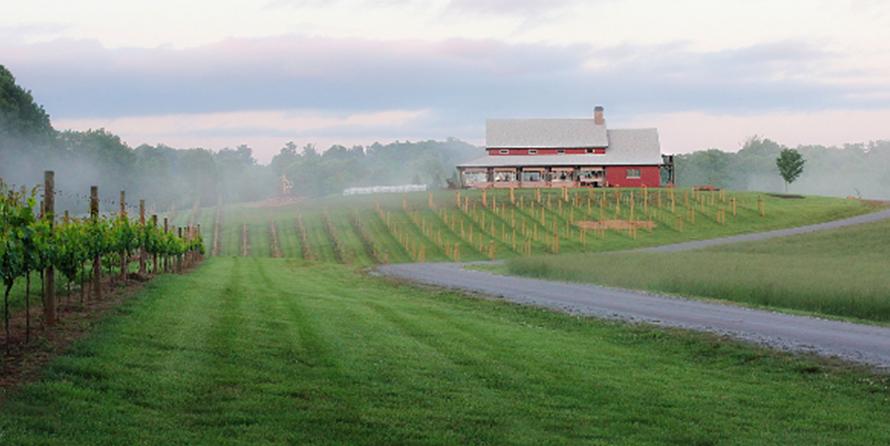 Cenita Vineyards in the misty morning light.