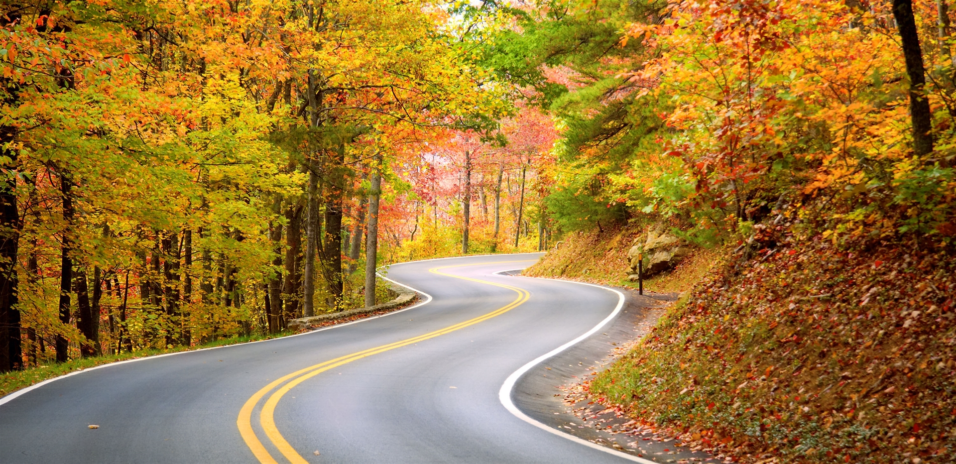 Winding scenic highway with gorgeous fall color.