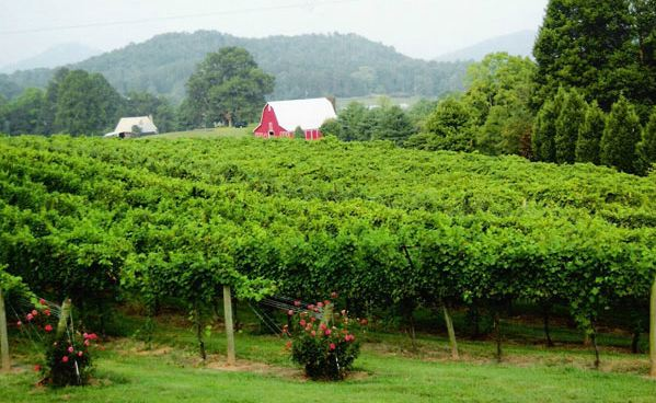 Tiger Mountain Vineyard and Winery near Helen, Ga.