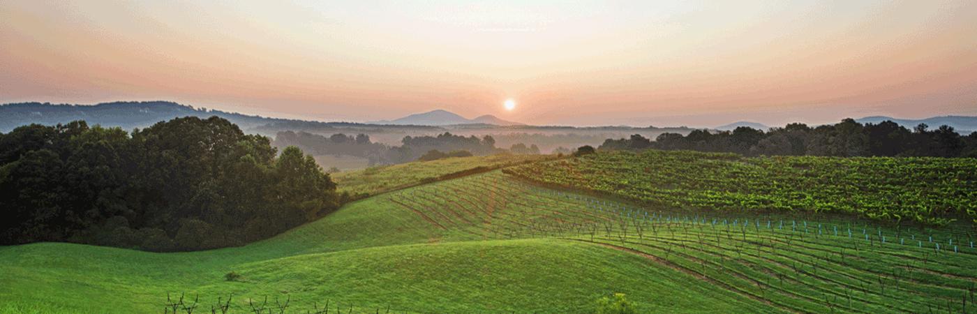 Kara Vineyards and Winery near Helen, Ga.