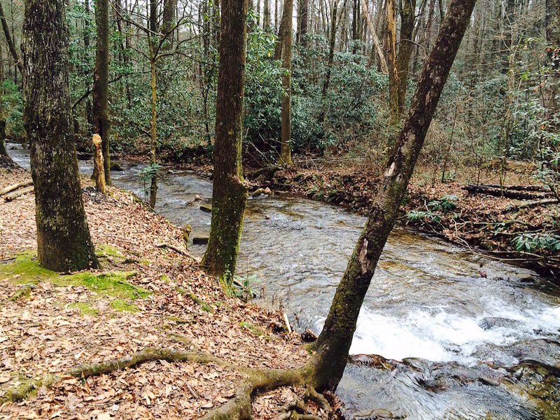 McClure Creek on Tray Mountain Road